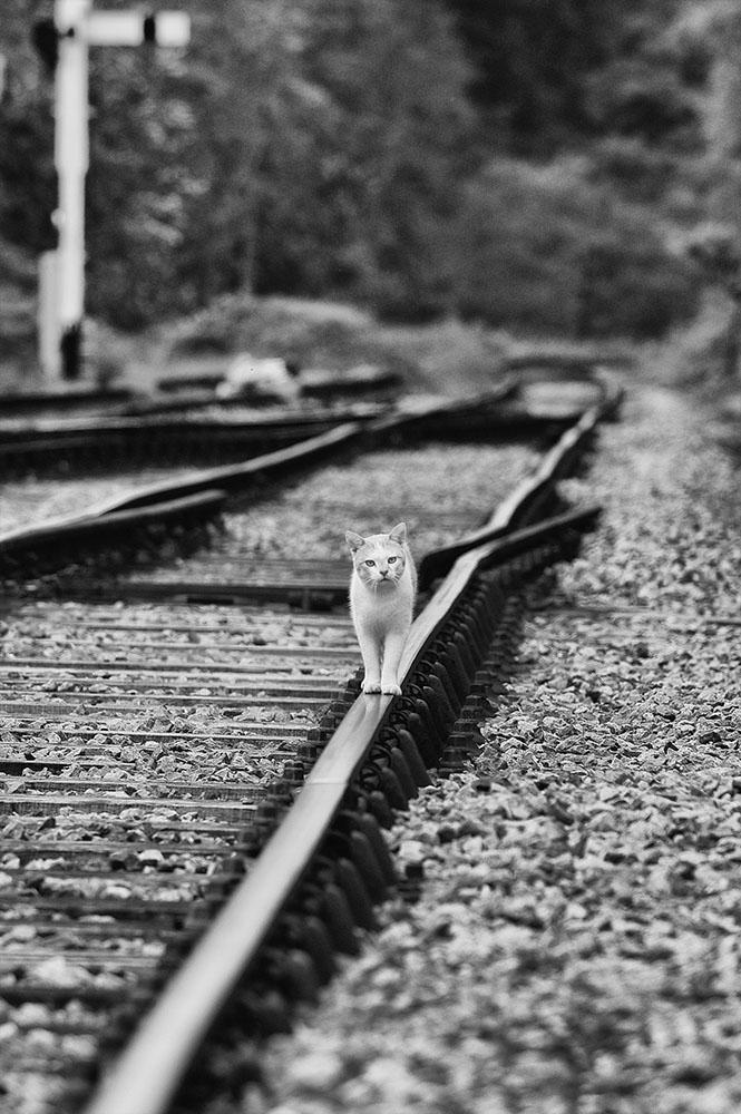 north-yorks-cat